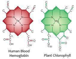 Sange:clorofila