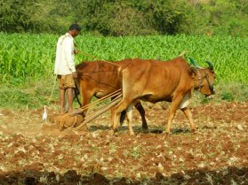 Traditional_Farming_Methods_and_Equipments